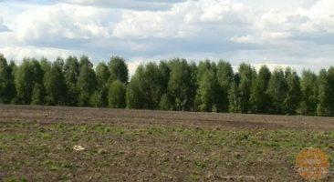 Земельный участок 2,64 Га Кольцово Новосибирский район