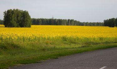 Геофонд - зачем он Новосибирскому правительству?