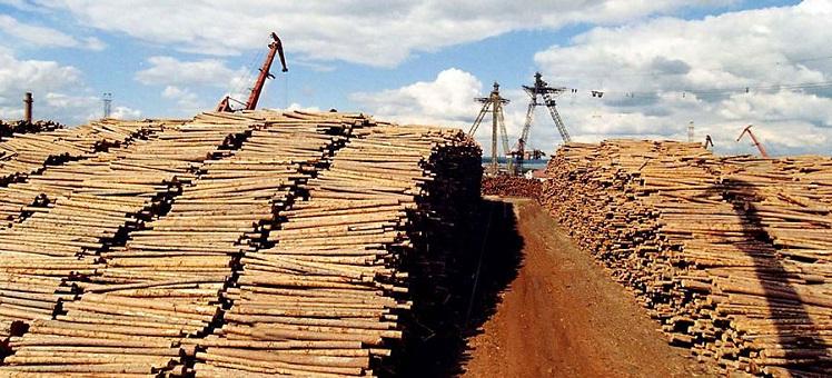 Лесопромышленный комплекс по глубокой переработке древесины на территории Кыштовского и Северного районов НСО компании «Сибирский ЛПК»