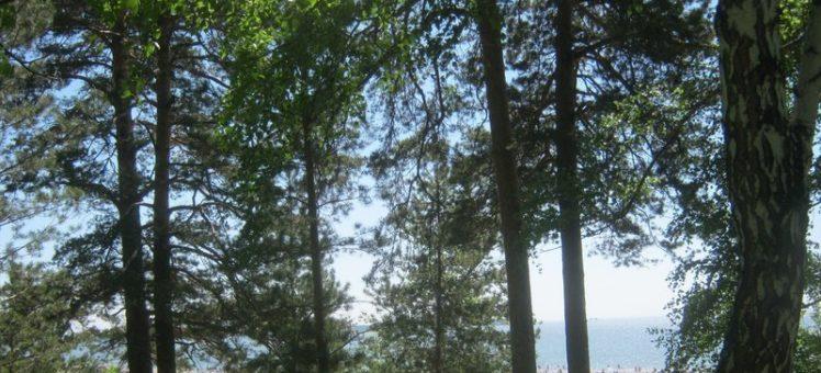 Изменить зонирование на категорию Р-1 не допускающую застройки в лесу и на пляже Академгородка