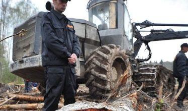Госдума может разрешить капитальную застройку на землях лесного фонда