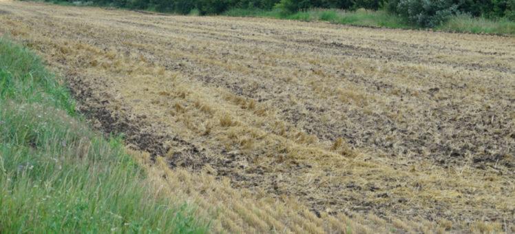 Правительство определило признаки неиспользуемых сельхозземель