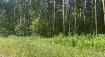 Земельный участок 1,08 Га ул. Дачное шоссе Заельцовский район
